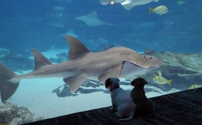 Новые посетители аквариума.