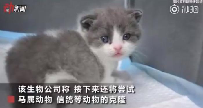 Котёнок Чеснок чувствует себя Ñорошо. /Фото: кадр из телерепортажа