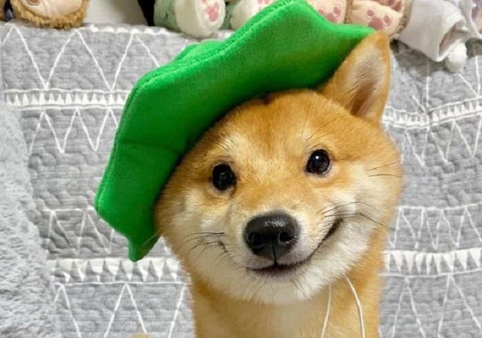 Пёс, у которого всё в жизни отлично!