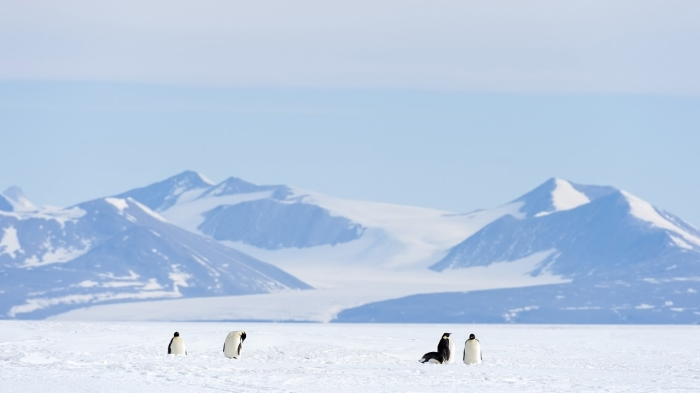 Шельфовый ледник Росса, до которого предстоит добраться путешественникам. /Фото:cgtn.com