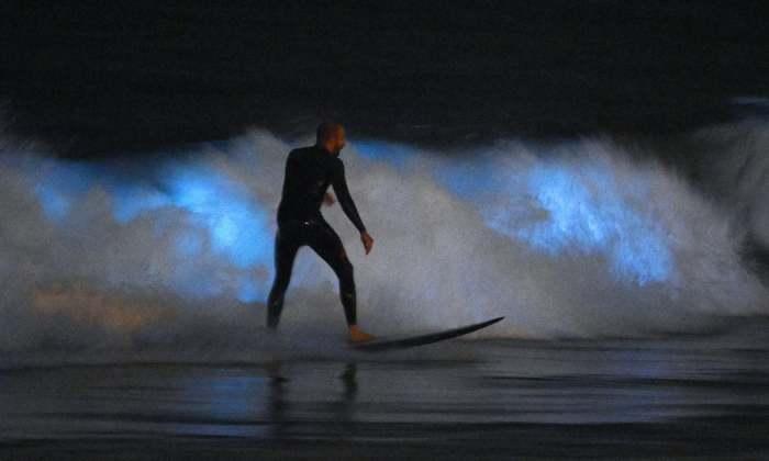 Серфер катается на светящихся волнах. /Фото: theguardian.com