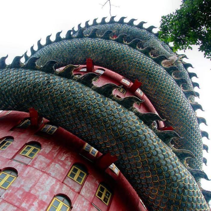 Вблизи зеленое чешуйчатое тело впечатляет/ Фото:supercoolpics.com
