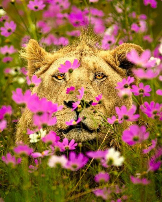 В таком ракурсе вы льва наверняка еще не видели.