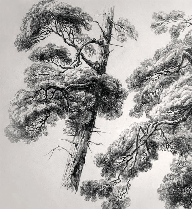 И. Шишкин. Этюд «Сосны». 1883 год. /Фото из коллекции музея