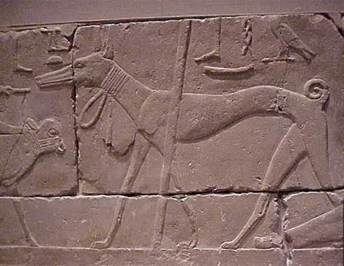 Фрагмент барельефа 2490-2323 гг. до н. э. Египетский известняк Старого Царства. На собаке нечто наподобие ошейника.
