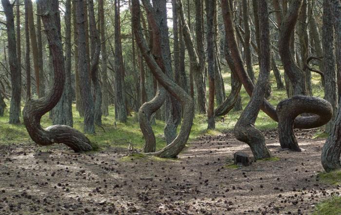 Некоторые даже считают, что этот лес омолаживает... /Фото:photosight.ru