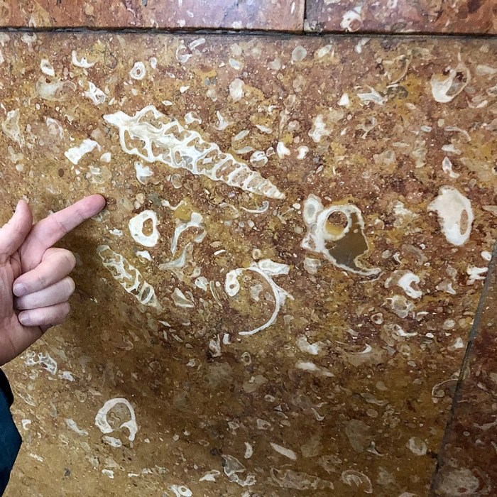 Стены метро необычайно информативны для палеонтолога. /Фото: И. Второв