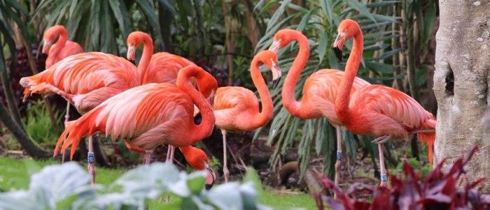 Птицы и животные требуют постоянного ухода.