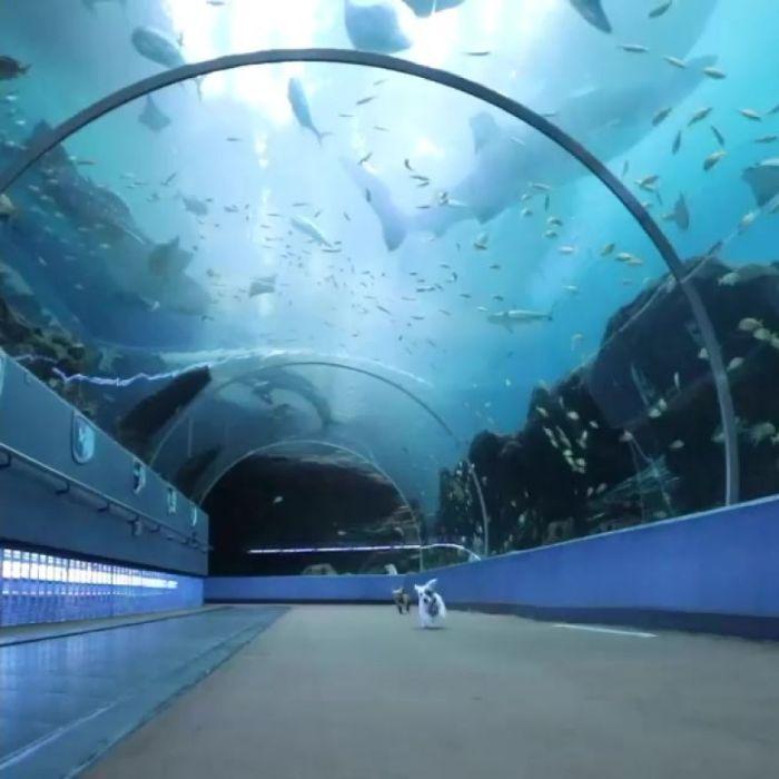 Малыши в огромном аквариуме. Вот где раздолье!