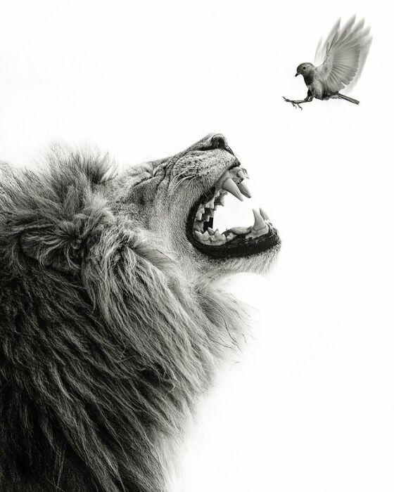 Охота на птичку.