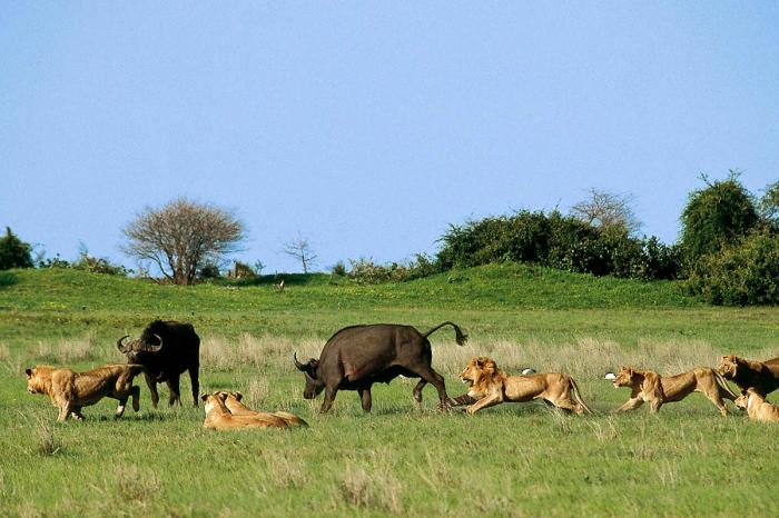 Животный мир Ботсваны необычайно богат, но иногда такое «разнообразие» ставит в тупик. /Фото:cazloyd.com