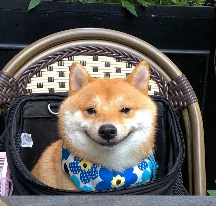 Когда люди видят этого уморительного пса, они тоже начинают смеяться.