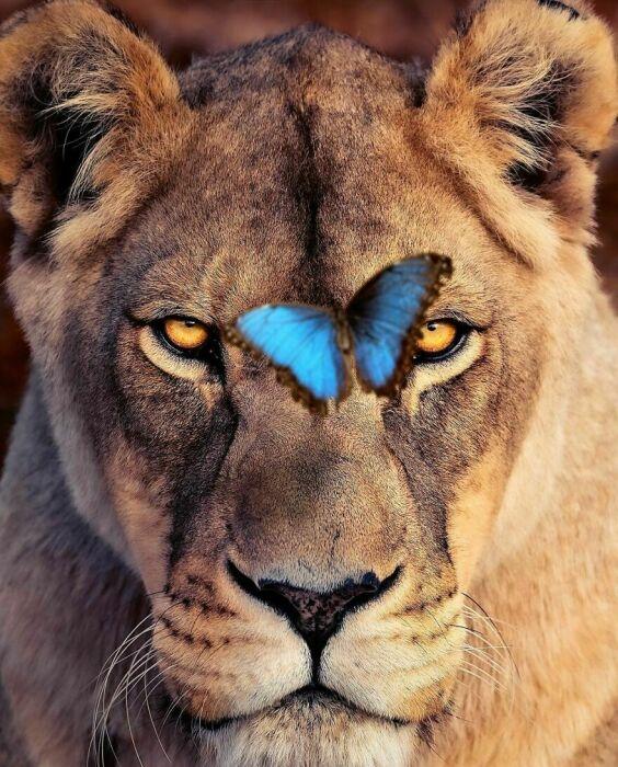Такой великий и такой уязвимый зверь.