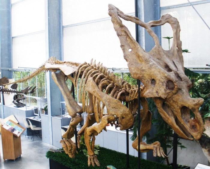 Знаменитый скелет хасмозавра./Фото:travelermap.ru