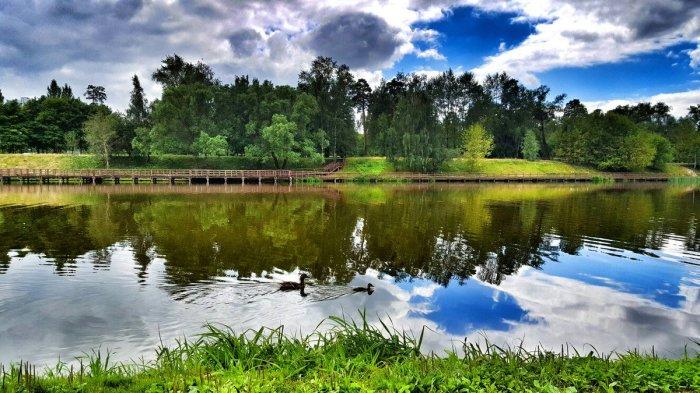 Шикарный пруд был создан братьями путем создания на местной речке плотины. /Фото:twimg.com