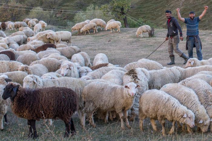 Местные пастухи. /Фото:shandi1.livejournal.com