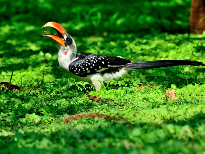 Здесь обитают десятки видов птиц. /Фото:travel-to-parks.ru