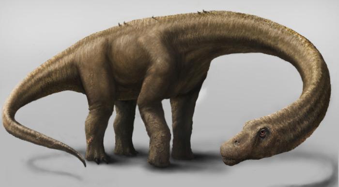 Примерно так выглядел динозавр-дредноут. /Фото:wildwildworld.net.ua