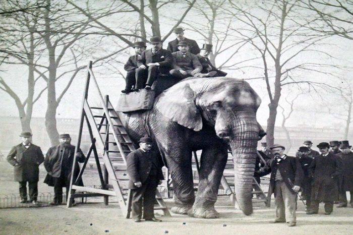 Мужчины позируют на слоне Джамбо в Лондоне, Англия./Фото:canadashistory.ca