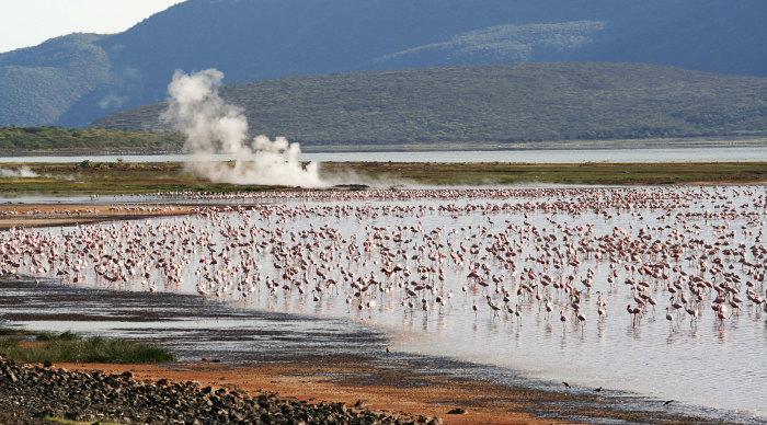Фламинго соседствуют с горячими гейзерами. /Фото: sunsafaris.com