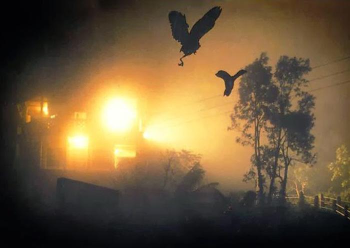 Птиц манит яркий свет. /Фото:hauntedindia.blogspot.com