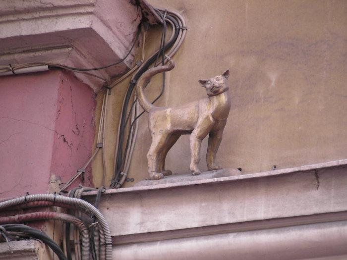 Кошка Василиса. /Фото:unplaces.ru