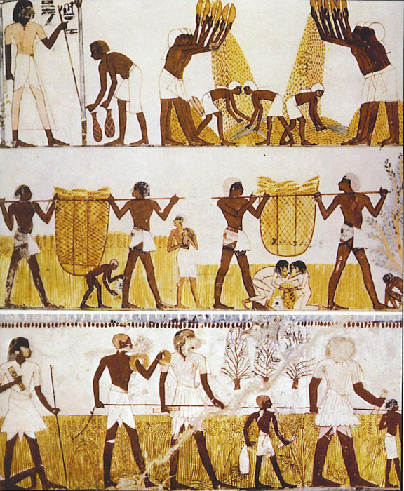 Сбор и молотьба пшеницы (гробница Менна, XVIII династии). /Фото:abzubov.com