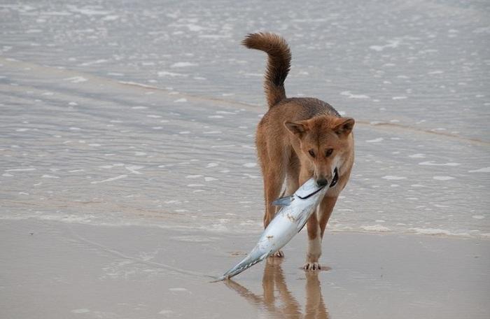 Дикие собаки веками живут в природе и не нуждаются в людях. /Фото:blogspot.com