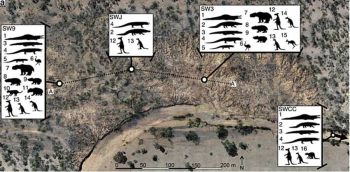 Эти окаменелости были разбросаны по четырем отдельным участкам раскопок.