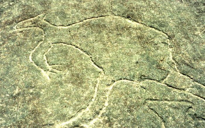Доисторические люди сосуществовали с гигантами тысячи лет и рисовали их. Наскальное изображение в Терри-Хилс, Новый Южный Уэльс/ Фото:wikipedia.og