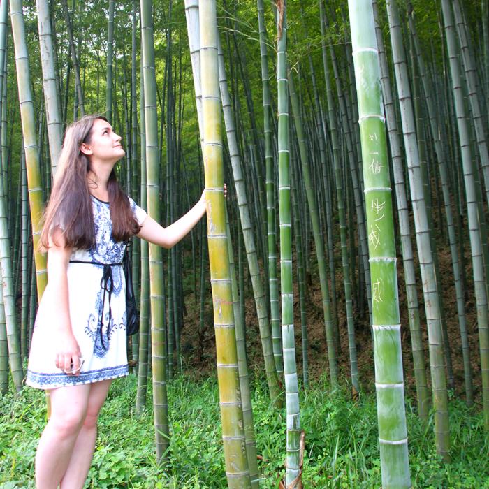 А вот такую ширину имеют стебли в живом бамбуковом лесу в Исине. /Фото:ubc.ca