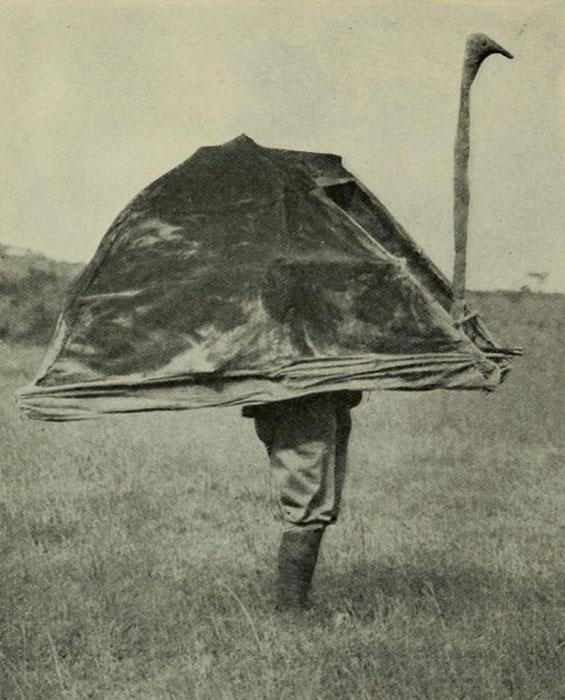 Эйкли изображает страуса, приманивая диких животных. /Фото:thevintagenews.com