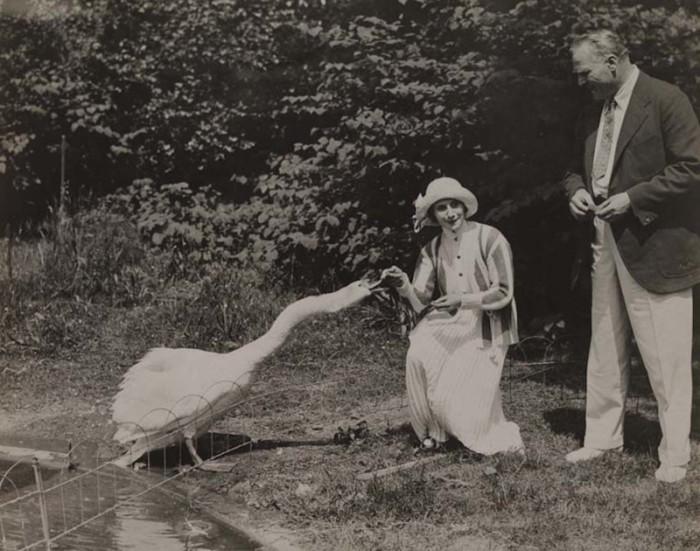 Лебеди с удовольствием ели из ее рук и всегда приходили на зов.