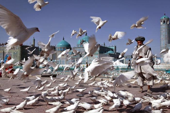 Белые голуби на территории Голубой мечети считаются таким же символом святости этого мечта, как и мавзолей Али. Фото:islamicfinder
