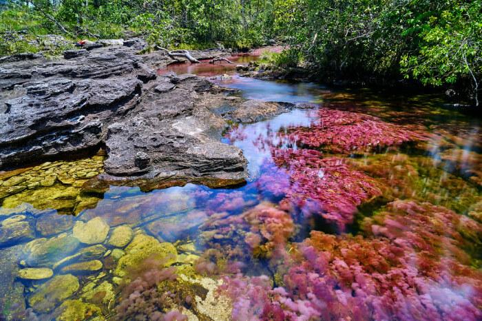 Радуга из водорослей. /Фото:expotur-eco.com