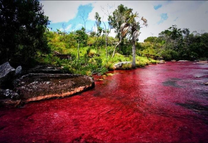 Основной цвет реки, а точнее, ее водорослей - ярко-красный. /Фото: blogspot.com