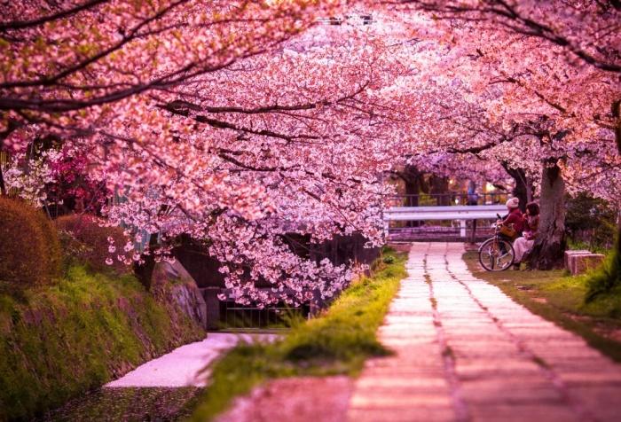 Сезон цветения сакуры - прекрасная тема для оформления упаковки. /Фото: coolrobo.ru
