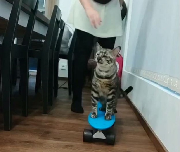 Кот катается на скейтборде. Видеокадр.