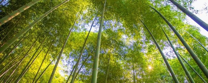 Бамбуковый лес Исина - самый большой в Китае. /Фото:marriott.com
