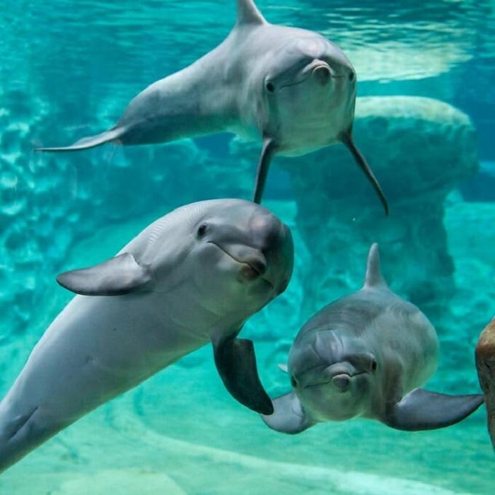 Дельфины в опустевшем аквариуме Джорджии.