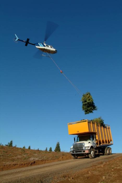 Подъем ёлки на вертолёте в США. /Фото:theconversation.com