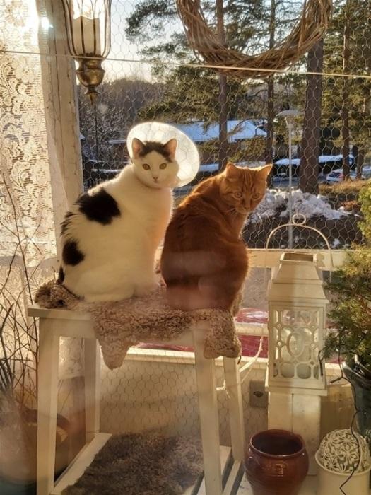 В каждом блоге должны быть котики. У Дагни они тоже есть.