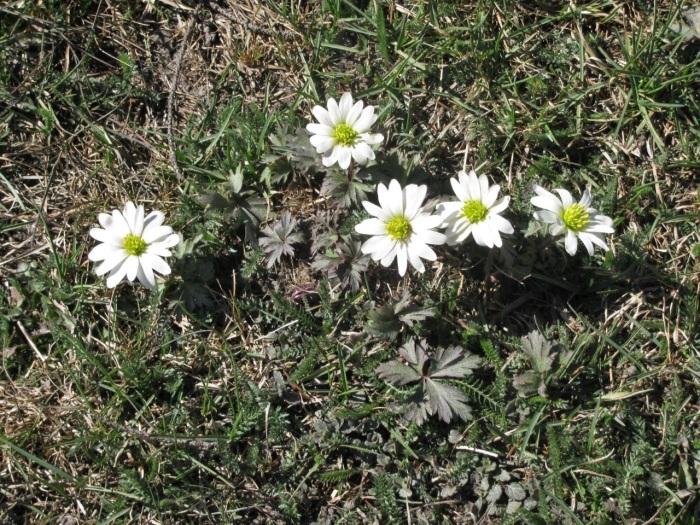 Цветочки от Дагни.