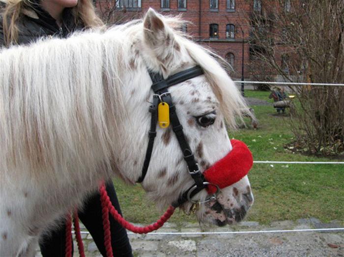 Лошадка из блога Дани.