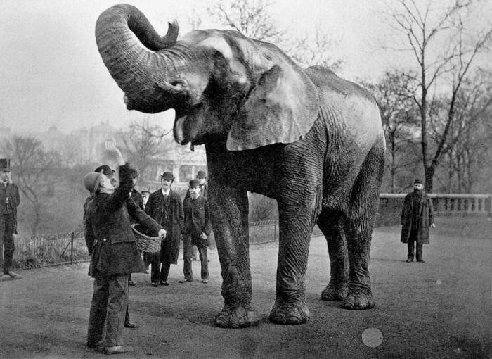 Слон-знаменитость и его смотритель Мэтью Скотт.