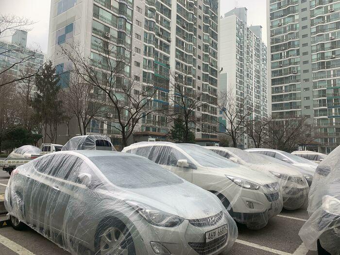 Автомобили под защитой. /Фото:@lonelady75, old.reddit.com
