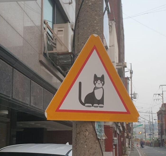 Знак предупреждает о возможном появлении кошки. /Фото:@constructional_HK, old.reddit.com
