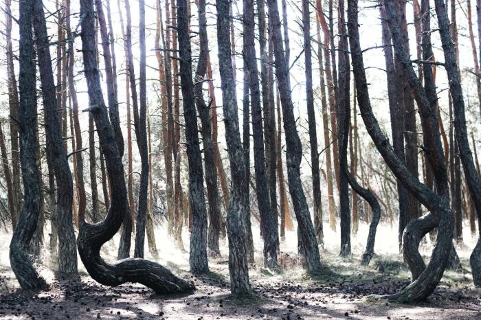 Здесь очень тихо и жутко. Но красиво. /Фото:.lifebuzz.com