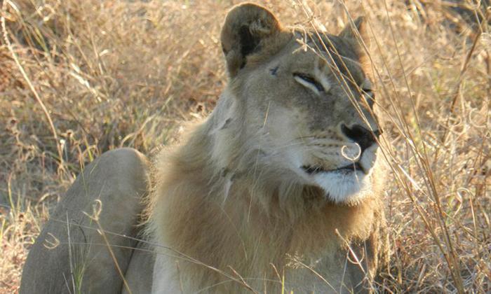 Одна из «бородатых» дам Ботсваны. /Фото:Jessica Vitale