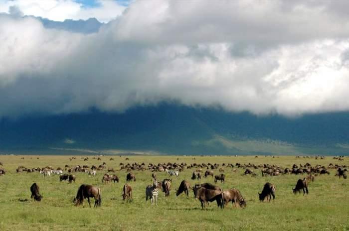 Просторы Нгоронгоро. /Фото: wild-wing-safaris.com